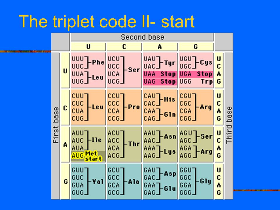 The triplet code II- start