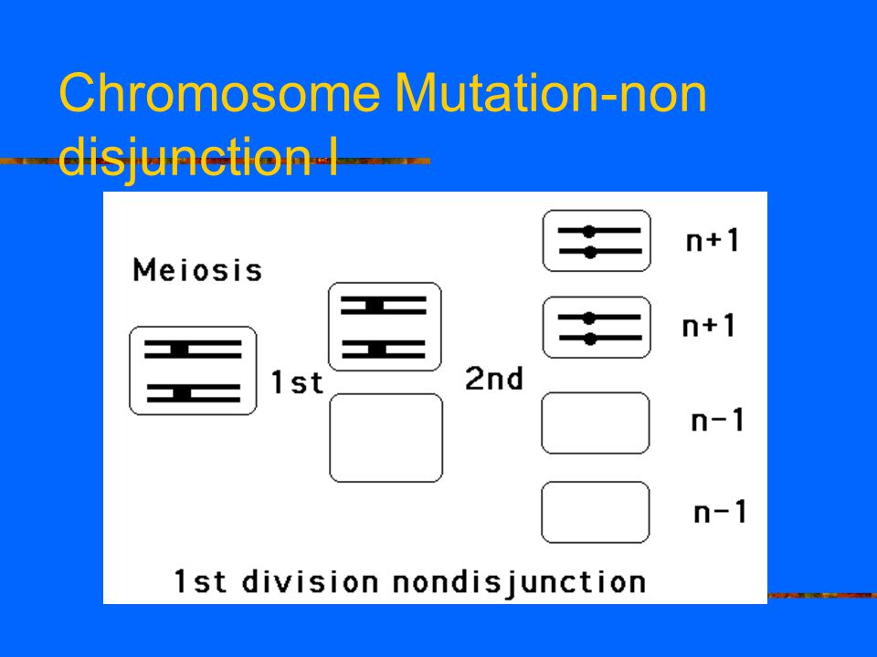 Chromosome Mutation-non disjunction I