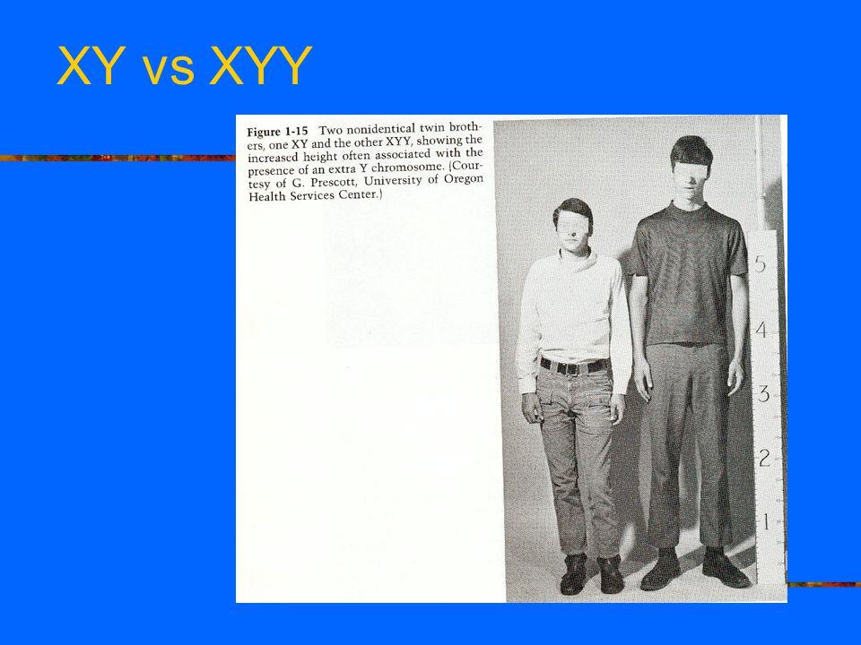 XY vs XYY
