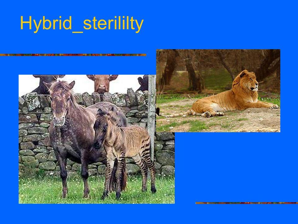 Hybrid_sterililty