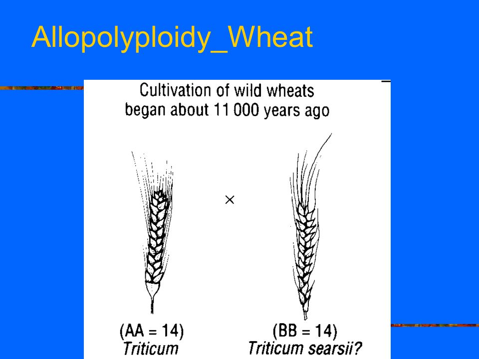 Allopolyploidy_Wheat