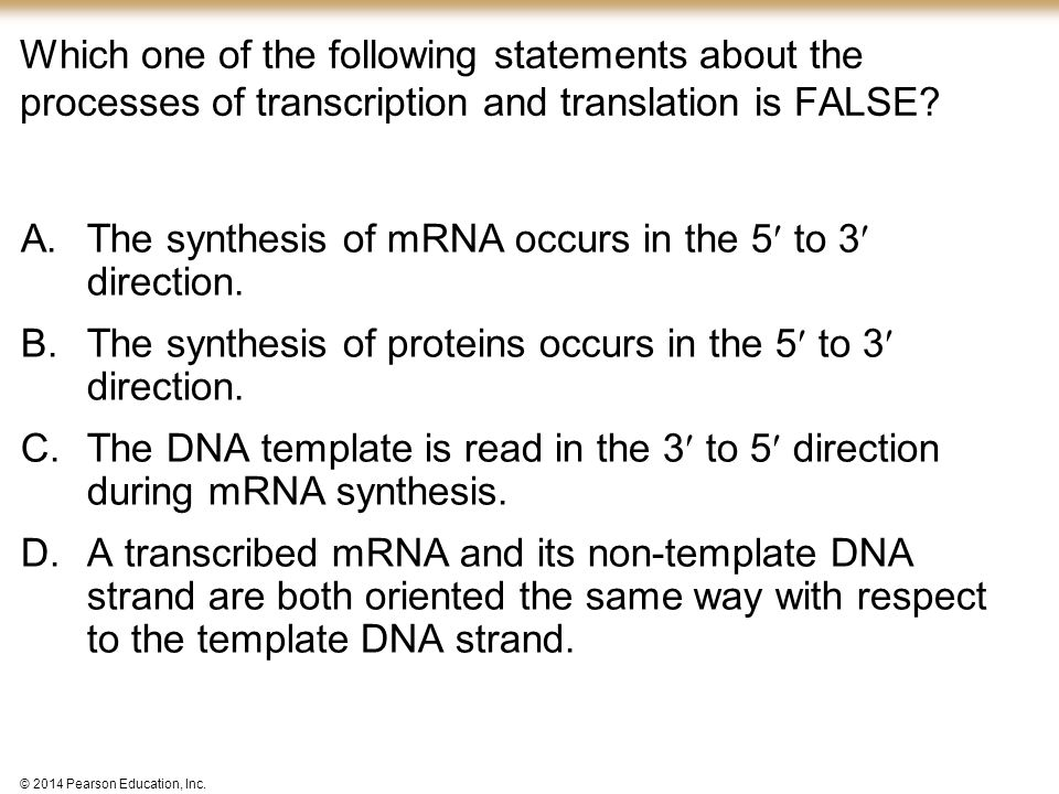 © 2014 Pearson Education, Inc. Which one of the following statements about the processes of transcription and translation is FALSE? A.The synthesis of