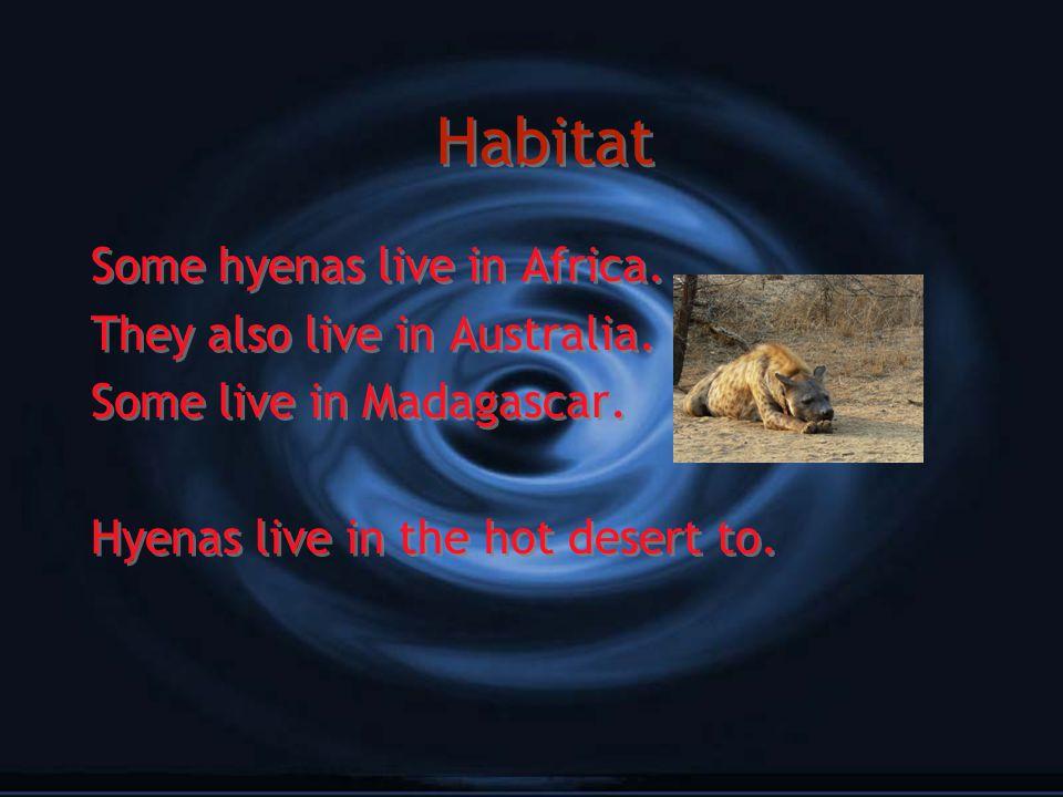 Diet Hyenas eat dear,zebra,gazelle and buffalo. Hyenas eat dear,zebra,gazelle and buffalo.