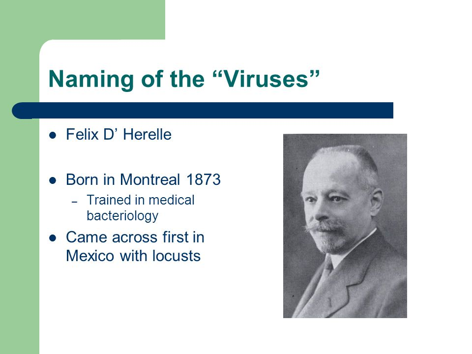 "Naming of the ""Viruses"" Felix D' Herelle Born in Montreal 1873 – Trained in medical bacteriology Came across first in Mexico with locusts"
