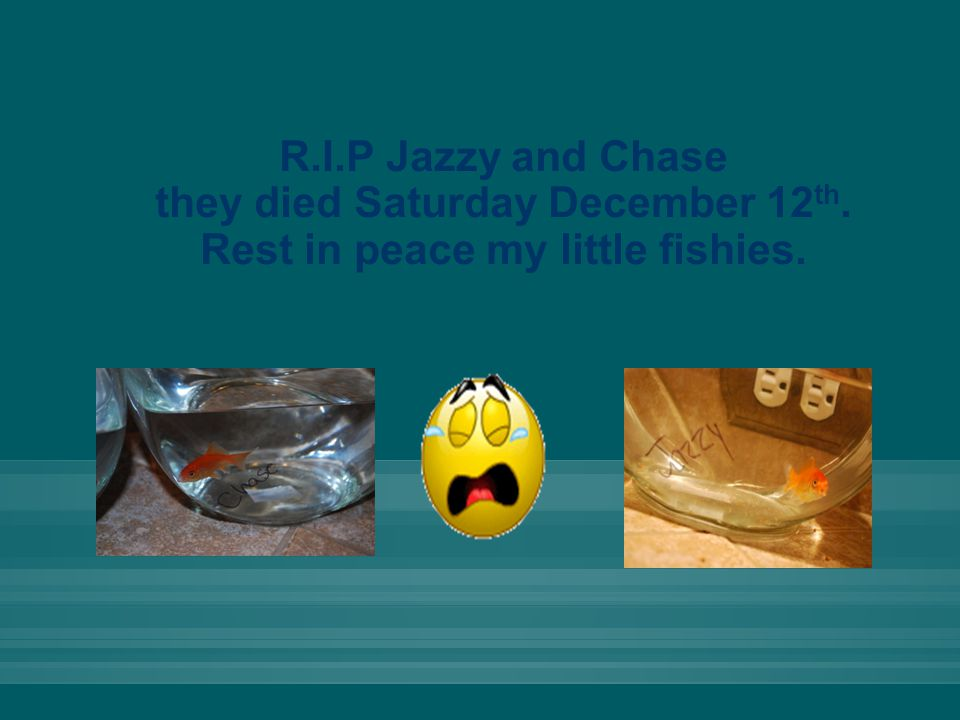 R.I.P Jazzy and Chase they died Saturday December 12 th. Rest in peace my little fishies.