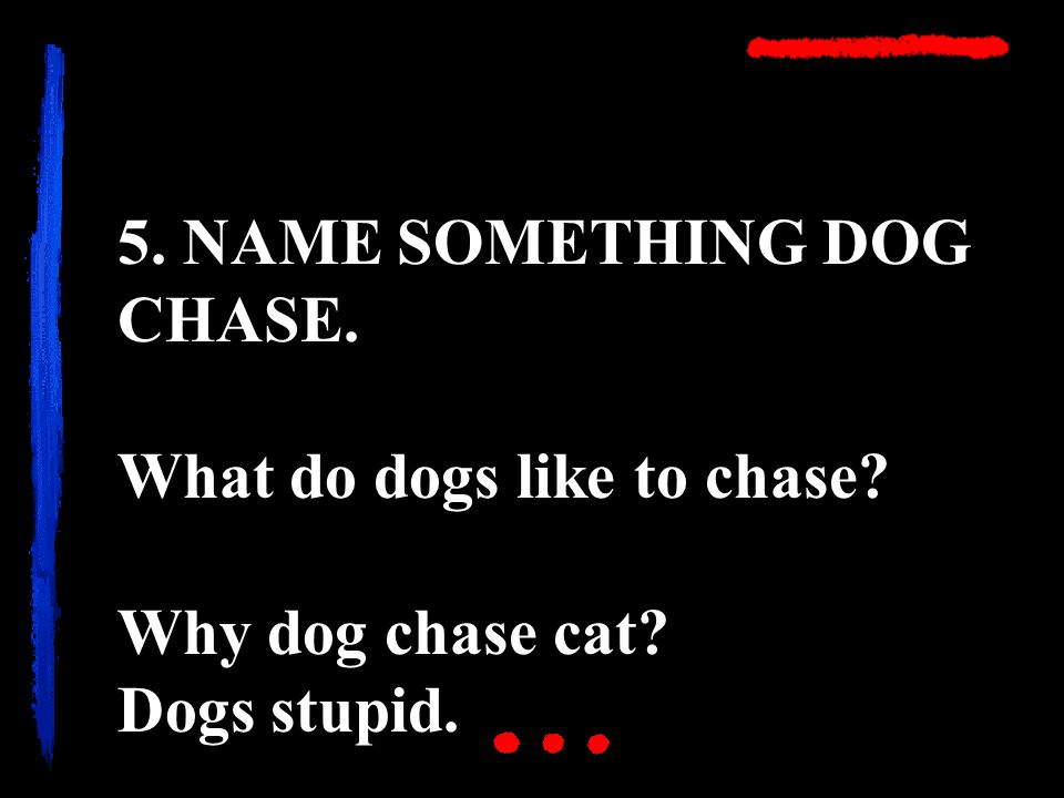 5. NAME SOMETHING DOG CHASE. What do dogs like to chase Why dog chase cat Dogs stupid.