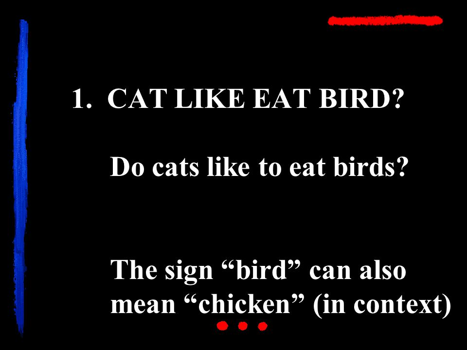 1. CAT LIKE EAT BIRD. Do cats like to eat birds.