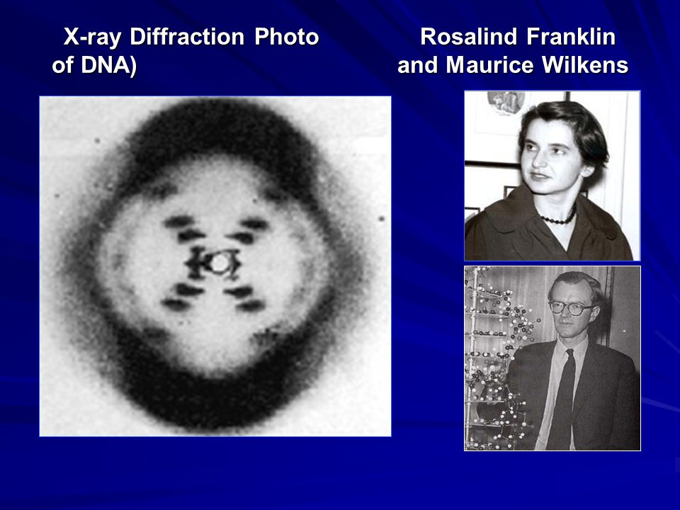 X-ray Diffraction Photo Rosalind Franklin of DNA) and Maurice Wilkens