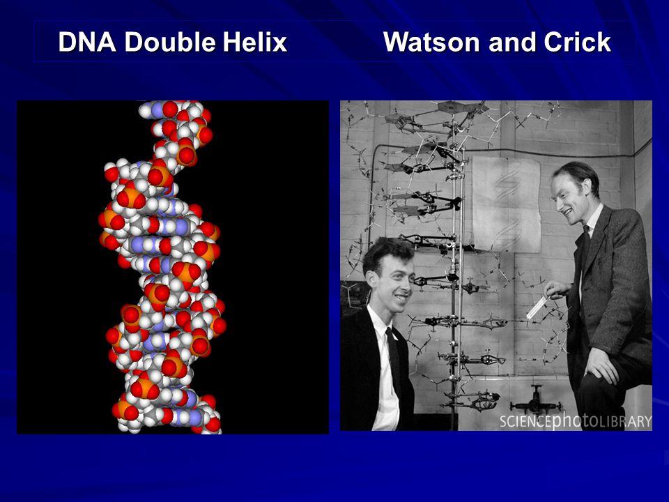 DNA Double Helix Watson and Crick