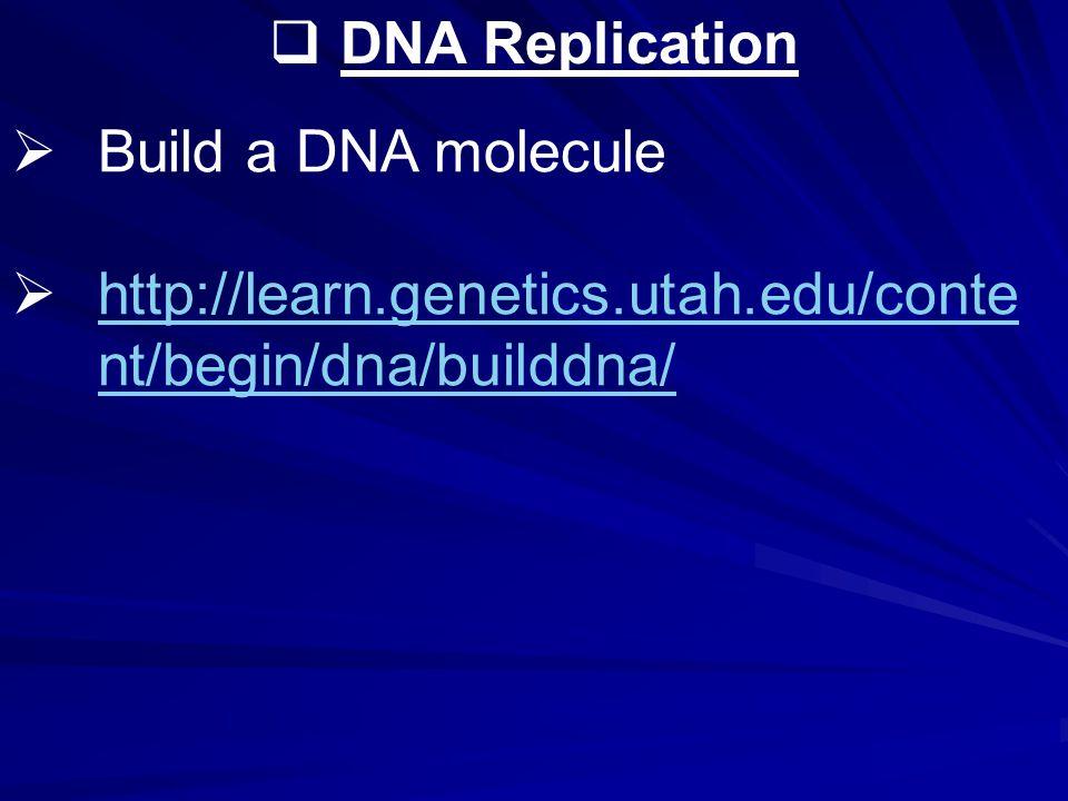  DNA Replication  Build a DNA molecule  http://learn.genetics.utah.edu/conte nt/begin/dna/builddna/ http://learn.genetics.utah.edu/conte nt/begin/dna/builddna/