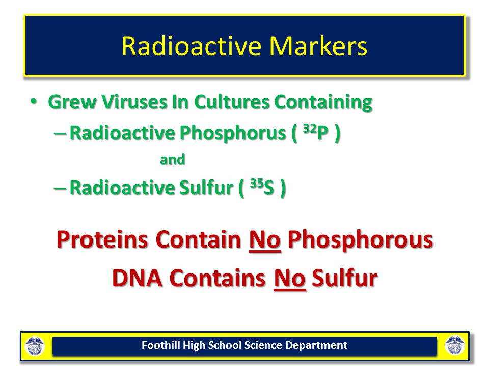 Foothill High School Science Department Radioactive Markers Grew Viruses In Cultures Containing Grew Viruses In Cultures Containing – Radioactive Phosphorus ( 32 P ) and and – Radioactive Sulfur ( 35 S ) Proteins Contain No Phosphorous DNA Contains No Sulfur