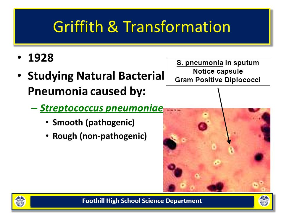 Foothill High School Science Department Griffith & Transformation 1928 Studying Natural Bacterial Pneumonia caused by: – Streptococcus pneumoniae Smooth (pathogenic) Rough (non-pathogenic) S.