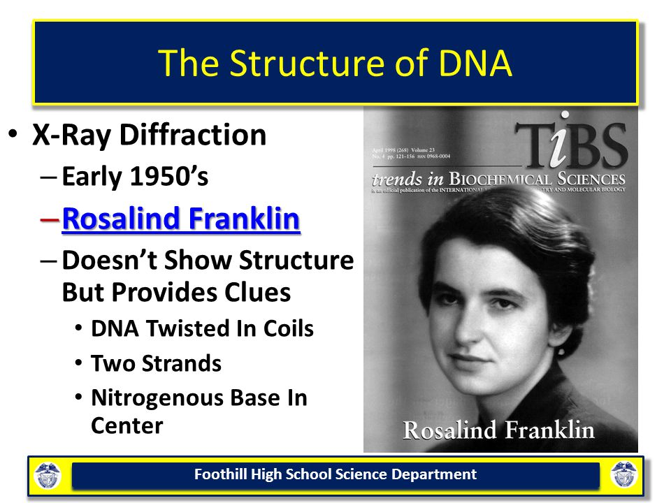 Foothill High School Science Department The Structure of DNA X-Ray Diffraction – Early 1950's – Rosalind Franklin Rosalind Franklin Rosalind Franklin – Doesn't Show Structure But Provides Clues DNA Twisted In Coils Two Strands Nitrogenous Base In Center