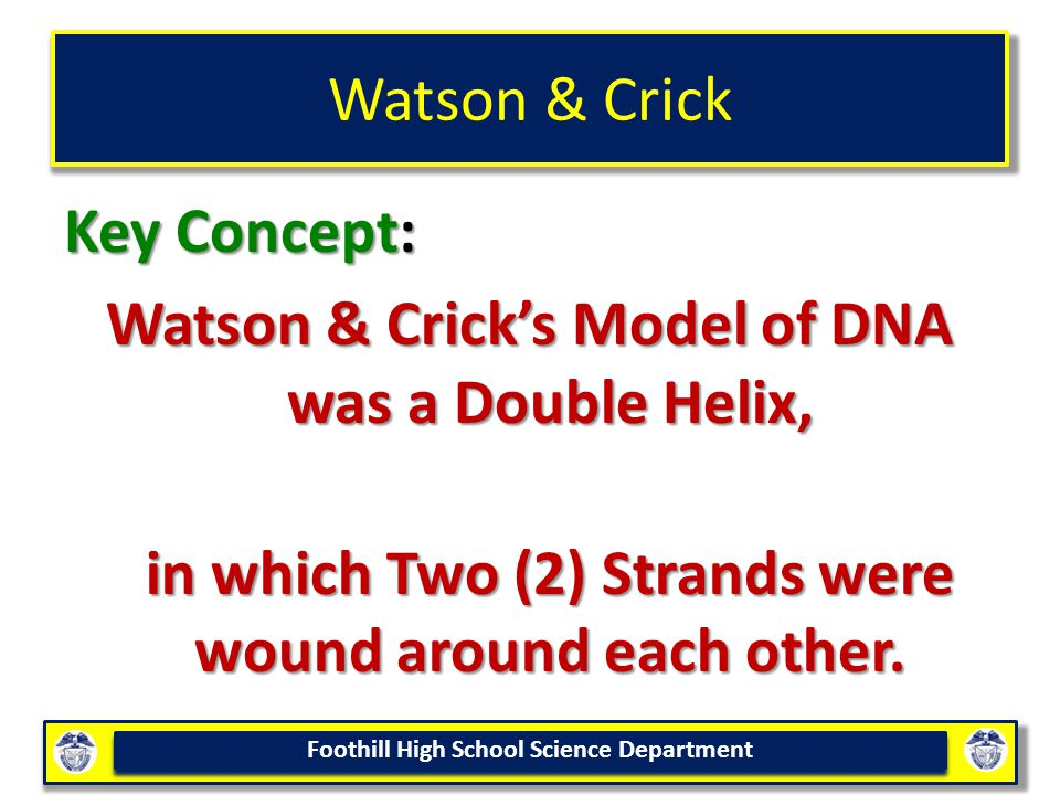 Foothill High School Science Department Watson & Crick Key Concept: Watson & Crick's Model of DNA was a Double Helix, in which Two (2) Strands were wound around each other.