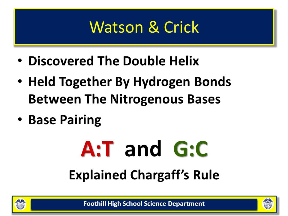Foothill High School Science Department Watson & Crick Discovered The Double Helix Held Together By Hydrogen Bonds Between The Nitrogenous Bases Base Pairing A:TG:C A:T and G:C Explained Chargaff's Rule