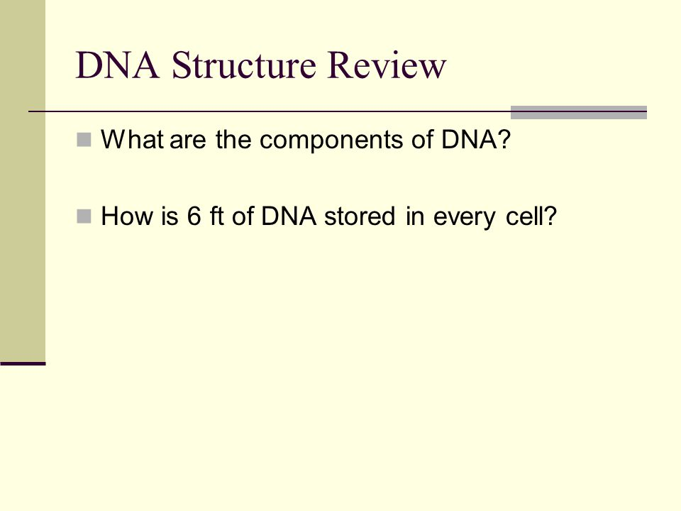 DNA Structure Review What are the components of DNA? How is 6 ft of DNA stored in every cell?