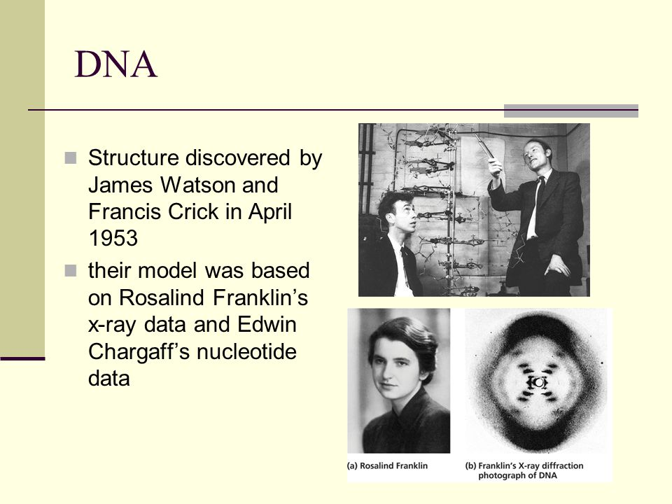DNA Structure discovered by James Watson and Francis Crick in April 1953 their model was based on Rosalind Franklin's x-ray data and Edwin Chargaff's nucleotide data