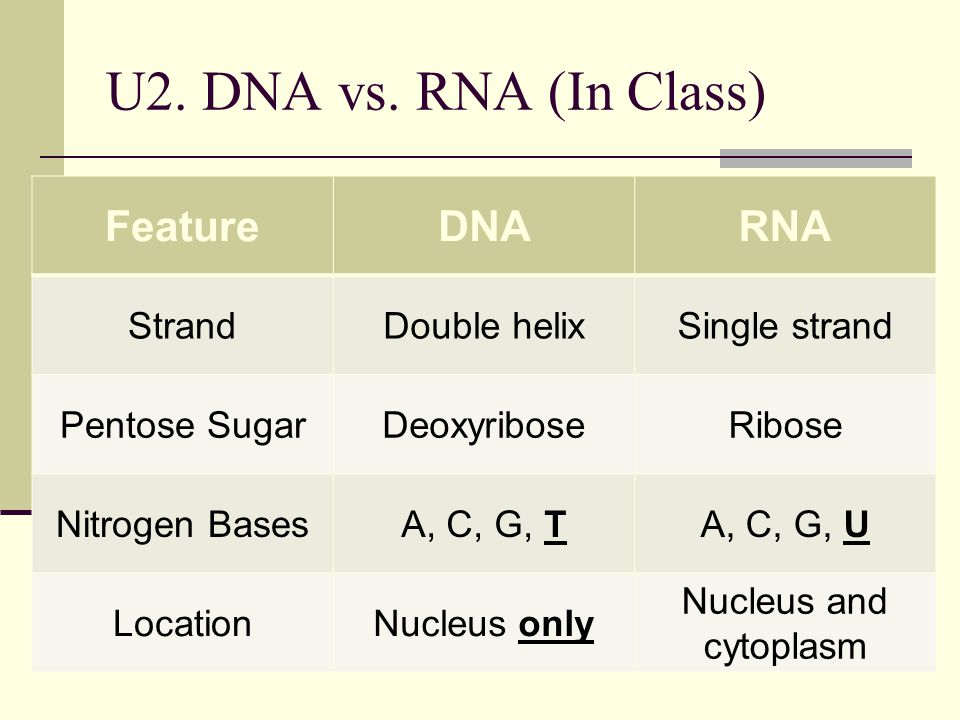 U2. DNA vs. RNA (In Class) FeatureDNARNA StrandDouble helixSingle strand Pentose SugarDeoxyriboseRibose Nitrogen BasesA, C, G, TA, C, G, U LocationNuc