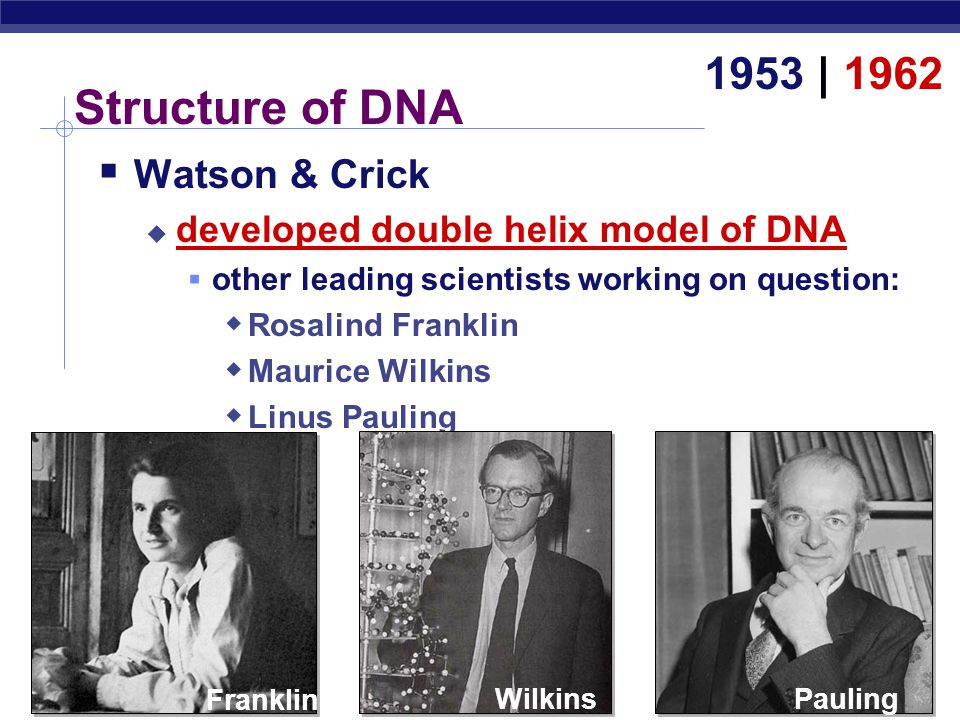 AP Biology Rosalind Franklin (1920-1958)  Wilkins & Franklin used X-ray crystallography to study DNA structure  Diffraction pattern used to deduce 3