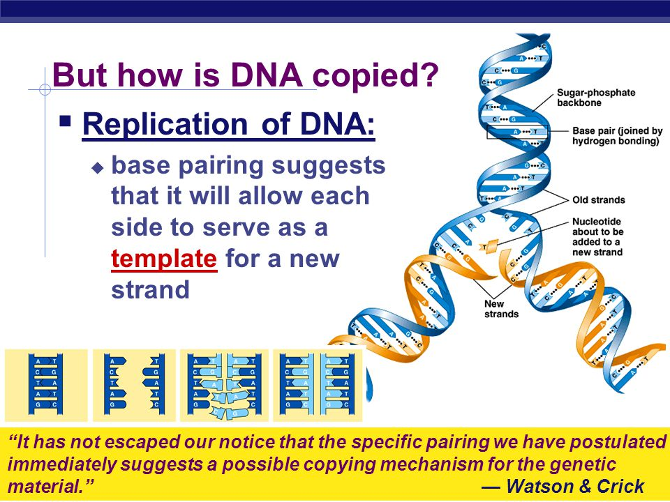 AP Biology Rosalind Franklin (1920-1958)