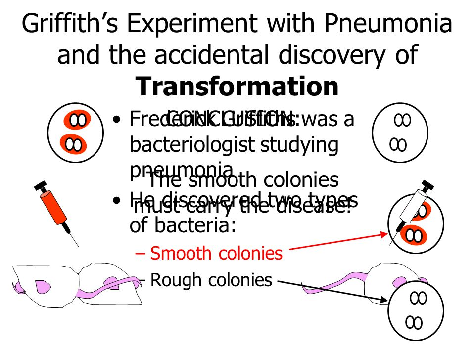 Griffith's Experiment with Pneumonia and the accidental discovery of Transformation Frederick Griffiths was a bacteriologist studying pneumonia He dis