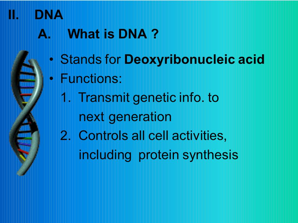II.DNA A.What is DNA . Stands for Deoxyribonucleic acid Functions: 1.