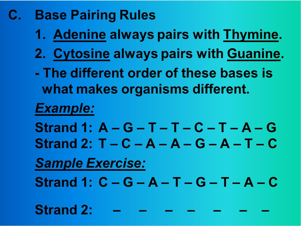 C.Base Pairing Rules 1. Adenine always pairs with Thymine.
