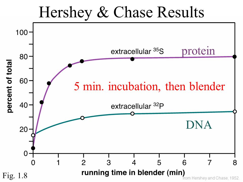 Hershey & Chase Results Fig. 1.8 5 min.