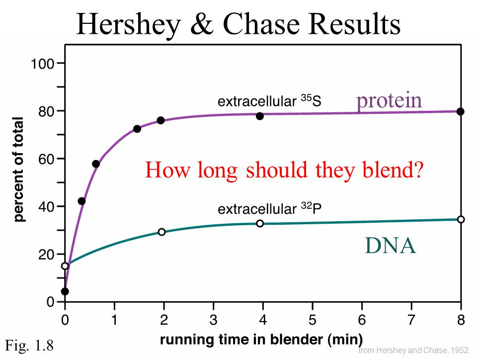 Hershey & Chase Results Fig. 1.8 DNA protein How long should they blend.