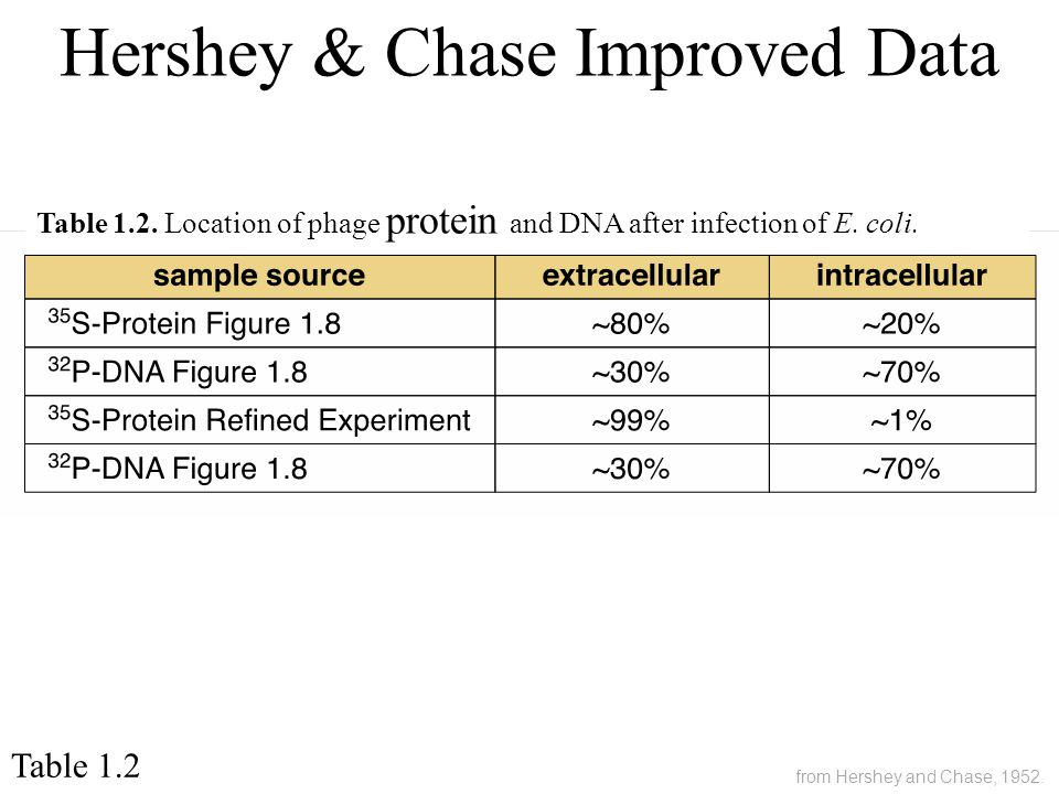 Table 1.2 Table 1.2. Location of phage protein and DNA after infection of E. coli. Hershey & Chase Improved Data from Hershey and Chase, 1952.