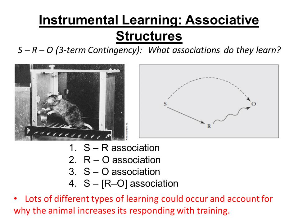 Instrumental Learning: Associative Structures 1.S – R association 2.R – O association 3.S – O association 4.S – [R–O] association Lots of different types of learning could occur and account for why the animal increases its responding with training.