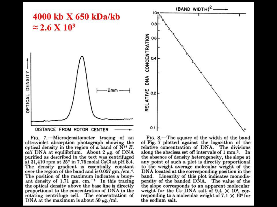 4000 kb X 650 kDa/kb ≈ 2.6 X 10 9