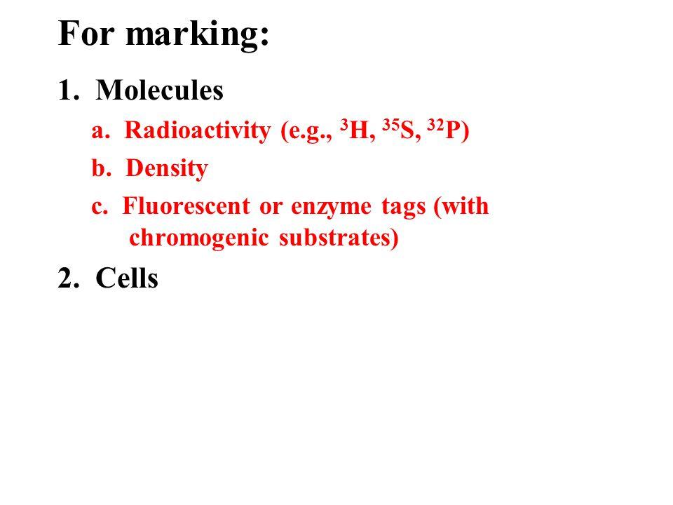 1. Molecules a. Radioactivity (e.g., 3 H, 35 S, 32 P) b.
