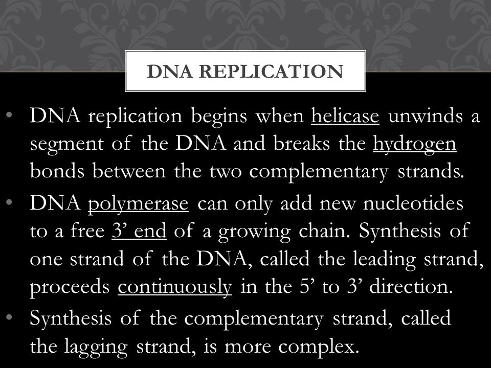 DNA replication begins when helicase unwinds a segment of the DNA and breaks the hydrogen bonds between the two complementary strands.