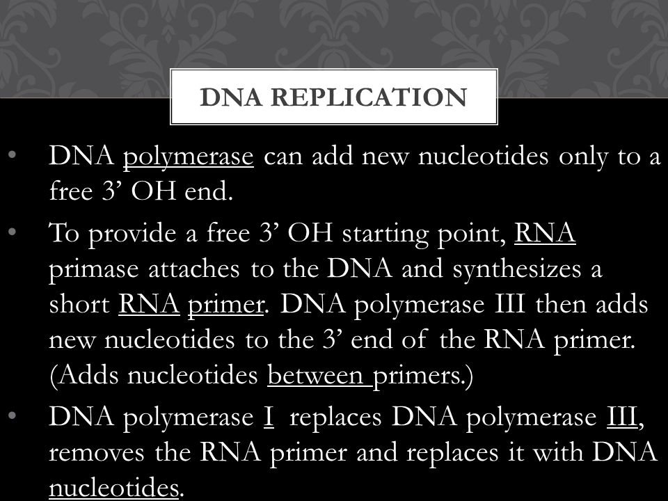 DNA polymerase can add new nucleotides only to a free 3' OH end.