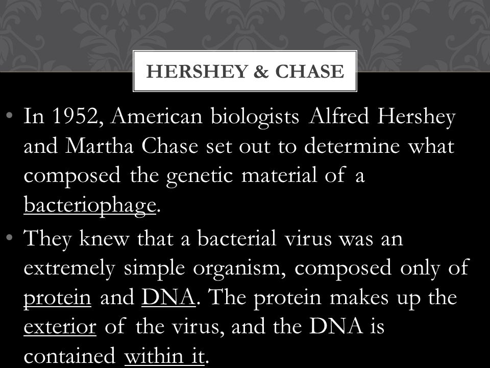 In 1952, American biologists Alfred Hershey and Martha Chase set out to determine what composed the genetic material of a bacteriophage.
