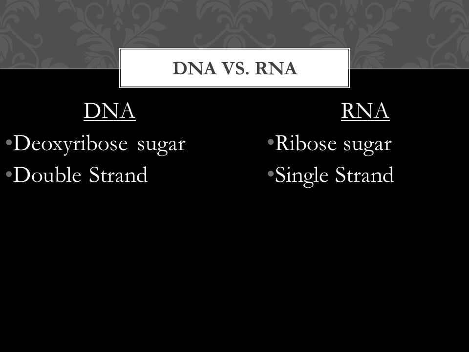 DNA Deoxyribose sugar Double Strand DNA VS. RNA RNA Ribose sugar Single Strand