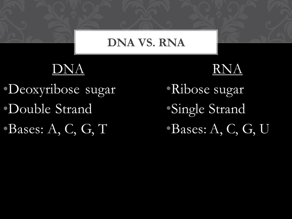 DNA Deoxyribose sugar Double Strand Bases: A, C, G, T DNA VS.