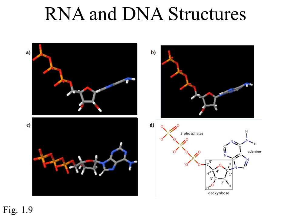 RNA and DNA Structures Fig. 1.9