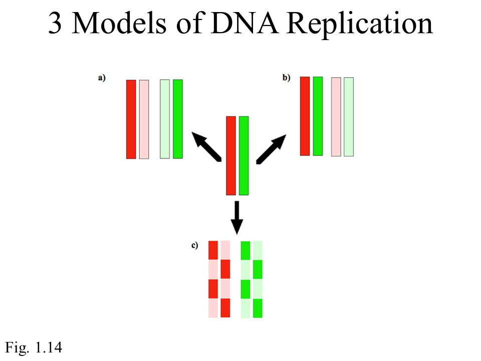 3 Models of DNA Replication Fig. 1.14