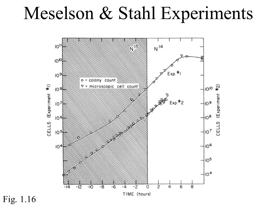 Meselson & Stahl Experiments Fig. 1.16