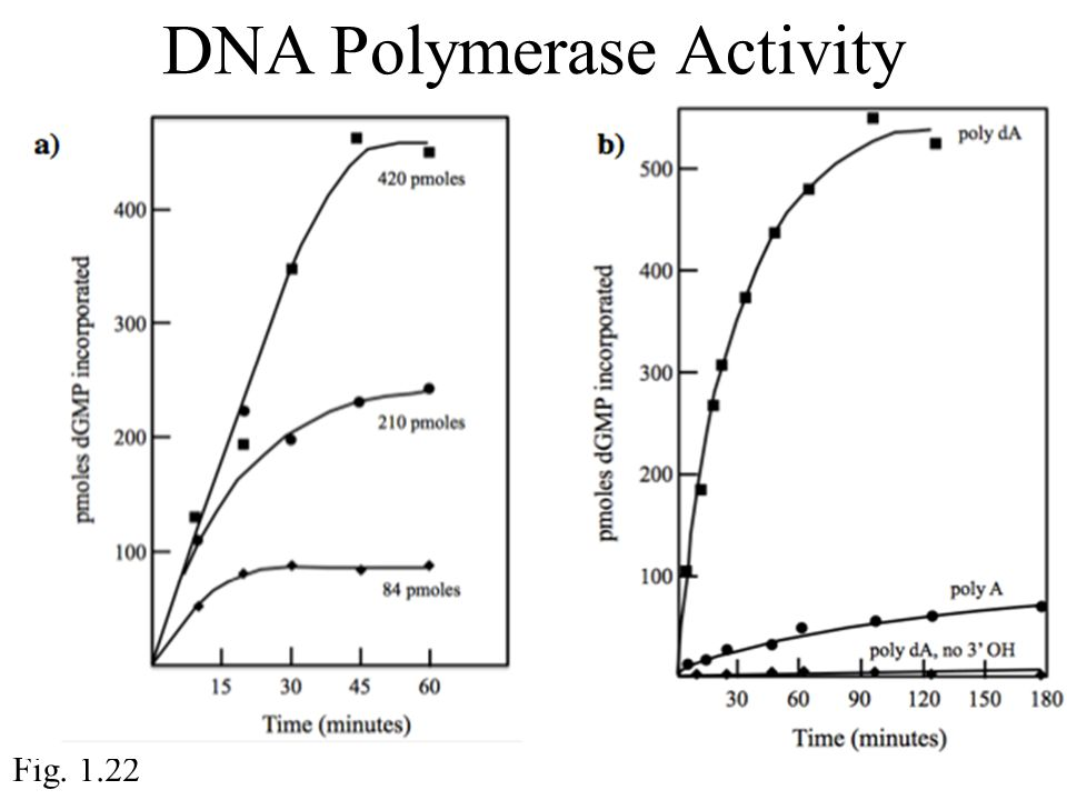 DNA Polymerase Activity Fig. 1.22