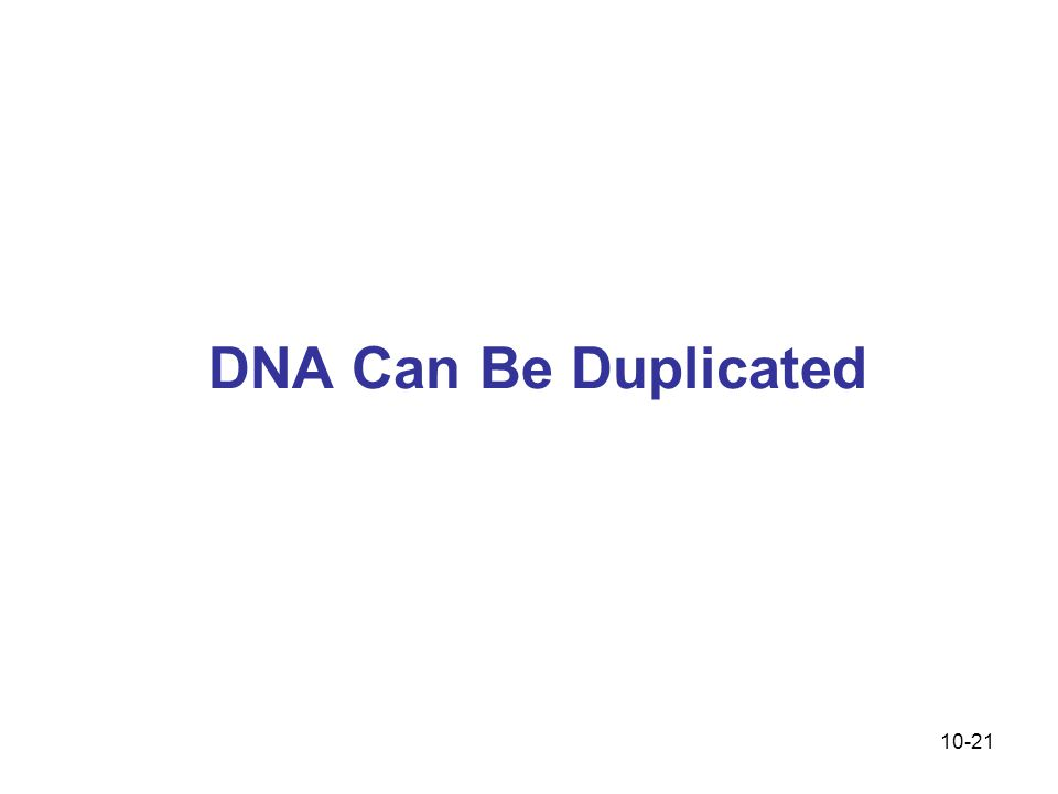 10-21 DNA Can Be Duplicated