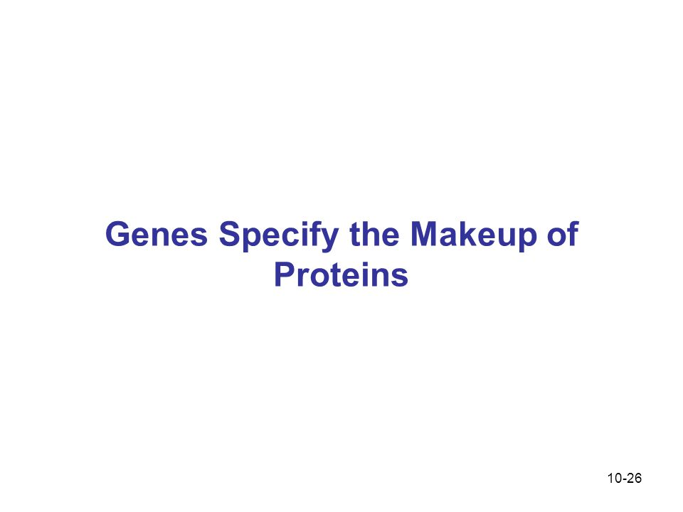 10-26 Genes Specify the Makeup of Proteins