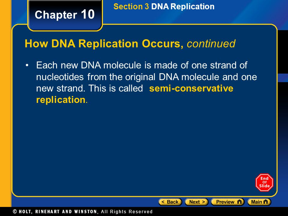 Chapter 10 How DNA Replication Occurs, continued Each new DNA molecule is made of one strand of nucleotides from the original DNA molecule and one new