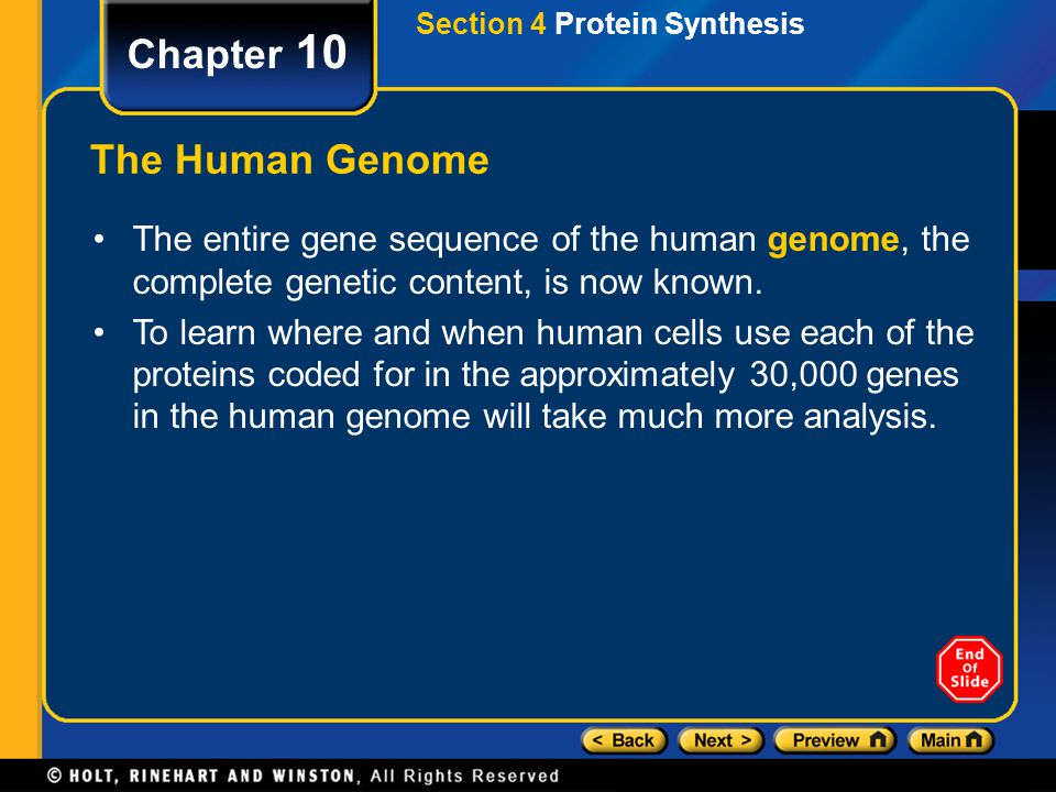 Section 4 Protein Synthesis Chapter 10 The Human Genome The entire gene sequence of the human genome, the complete genetic content, is now known. To l