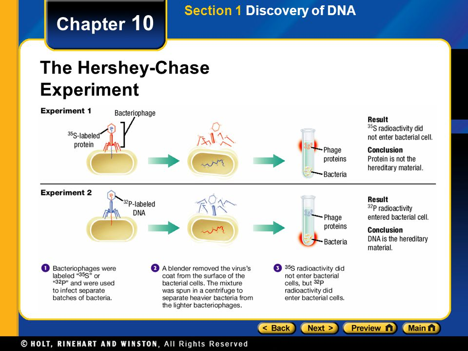 Chapter 10 The Hershey-Chase Experiment Section 1 Discovery of DNA