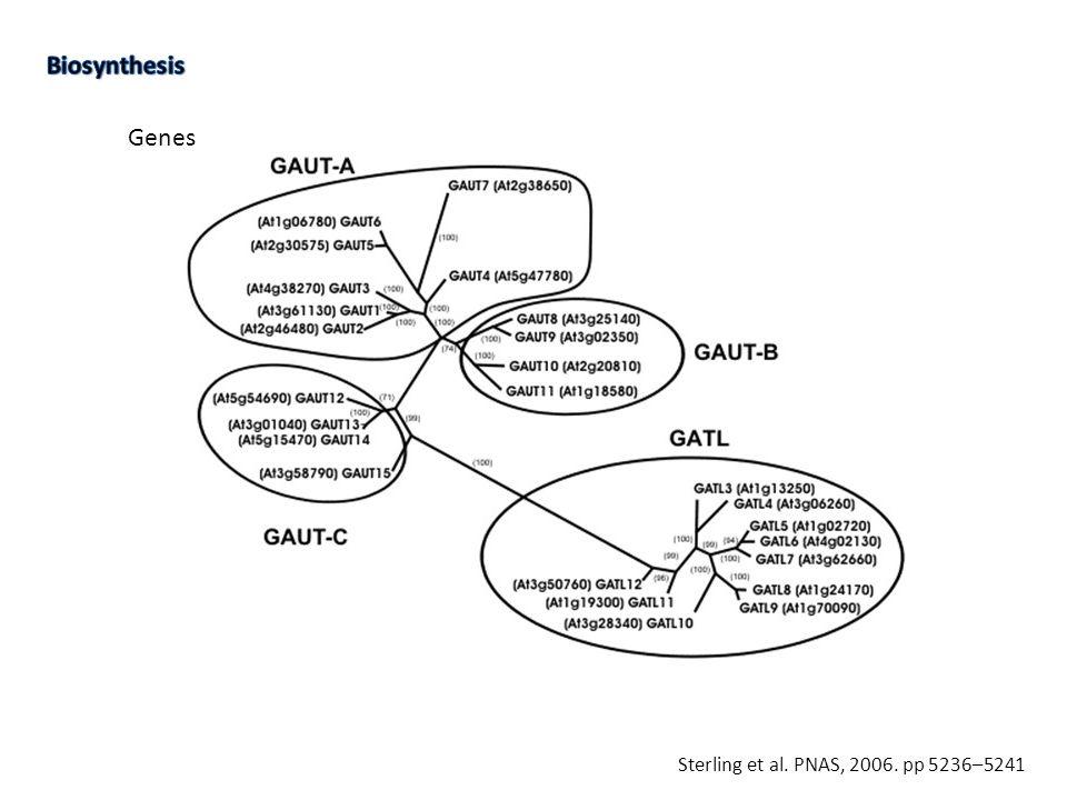 Genes Sterling et al. PNAS, 2006. pp 5236–5241