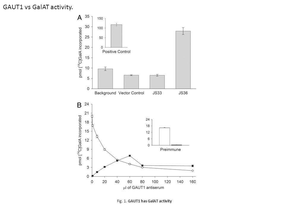 Fig. 1. GAUT1 has GalAT activity GAUT1 vs GalAT activity.