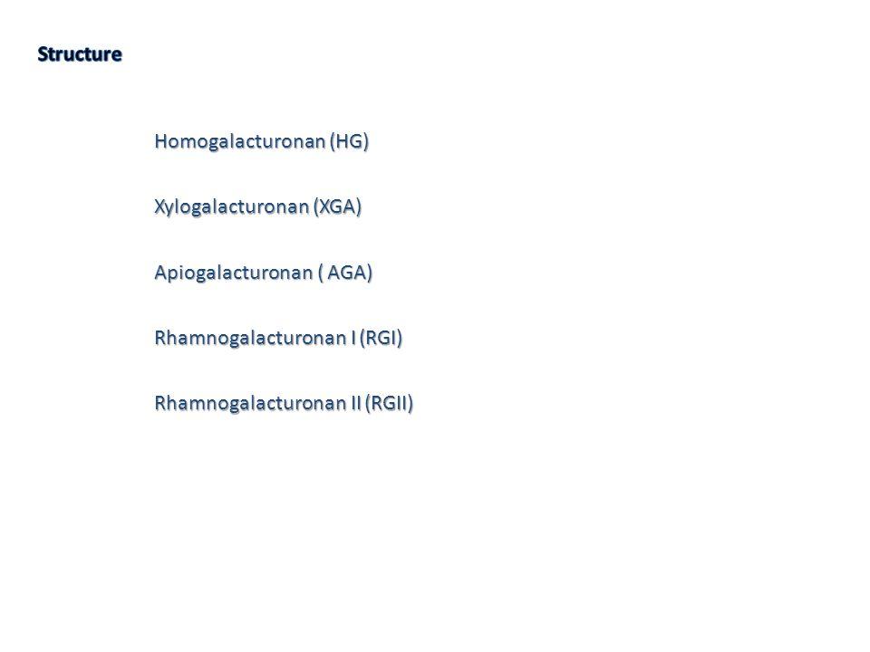 Homogalacturonan (HG) Xylogalacturonan (XGA) Apiogalacturonan ( AGA) Rhamnogalacturonan I (RGI) Rhamnogalacturonan II (RGII)